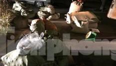 Bắt gần 1,5 tấn thuốc bắc nhập lậu trên tuyến đường 1A