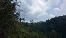 Giám đốc Văn phòng đăng ký đất đai ở Lạng Sơn bị tuyên 3 năm tù