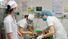 16 học sinh nhập viện vì bị ong trong sân trường tấn công
