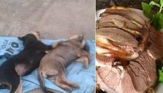 Tiết lộ gây sốc về thịt chó