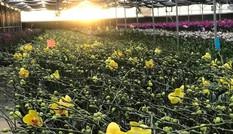 Cận cảnh hoa lan đua sắc tại Đại hội Đoàn toàn quốc