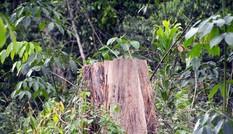 Vụ khai thác trái luật hơn 3.500m3 gỗ, nguyên Giám đốc Sở NN-PTNT bị khởi tố