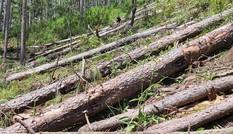 Chất lượng rừng tự nhiên chưa đạt yêu cầu phòng hộ