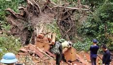 Tận thấy hiện trường rừng giáng hương cổ thụ bị tàn phá ở Tây Nguyên
