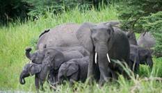 Những khoảnh khắc độc lạ hiếm thấy của loài voi