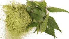 Bài thuốc tuyệt vời chữa bệnh viêm xoang, vảy nến từ cây sầu đâu
