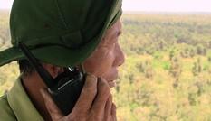 Nguy cơ cao cháy rừng U Minh Hạ