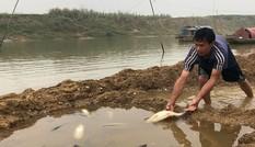 Cá lồng trên sông Chu chết bất thường