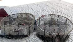 Thả hàng chục cá thể chim Gầm Ghì lưng nâu săn bẫy trái phép về môi trường tự nhiên