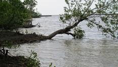 Đê biển Tây sạt lở nghiêm trọng trong mưa bão