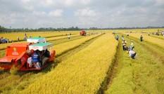 Chính phủ đề xuất miễn thuế đất nông nghiệp thêm 5 năm