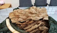 Người đàn ông giấu ngà voi, trầm hương trên chuyến bay về Việt Nam