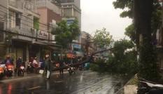 Cây đổ, đường phố Sài Gòn mênh mông nước sau trận mưa cực lớn