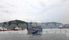 Bình Định cấm biển, yêu cầu sơ tán dân phòng chống bão số 12