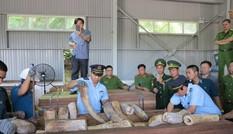 Bắt giữ lô hàng nghi ngà voi với số lượng lớn