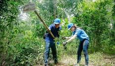 Trồng 1 tỷ cây xanh: Tránh chạy theo phong trào, 'trồng 10, chết 9'