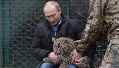 Tổng thống Nga chơi đùa với báo hoang