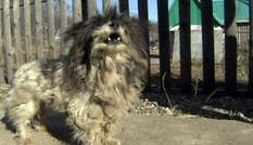 Chó nhỏ liều mình đuổi gấu dữ cứu sống 2 em bé