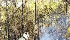 Cháy rừng dữ dội, cấp điện căng thẳng, EVN báo cáo khẩn Thủ tướng