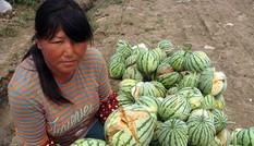 Bản tin 14H: Trung Quốc và đại họa thực phẩm bẩn