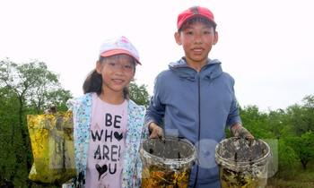 Trẻ em thành phố Vinh lội bùn đi săn 'cua lạ' nơi rừng bần