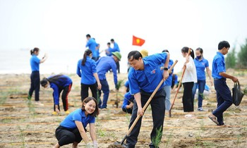 Central Youth Union launched tree planting at the beach in Nghe An.  Photo: Duong Trieu