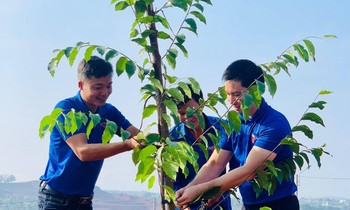 Dak Nong youth responded to the tree planting movement