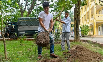 According to experts, planting trees should take into account the maintenance and development after planting