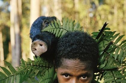 Bộ tộc nguyên thủy nào còn sót lại ở Indonesia  mà lợn được xem là tiền tệ với họ?