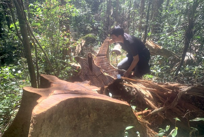 Hiện trường vụ khai thác lâm sản trái phép ở xã Ia Bă, huyện Ia Grai, tỉnh Gia Lai