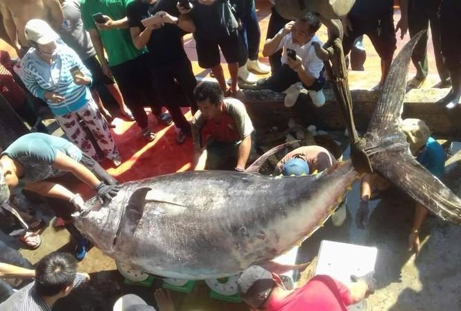 Bắt cá ngừ vây vàng 'khủng' nhất ở Trường Sa