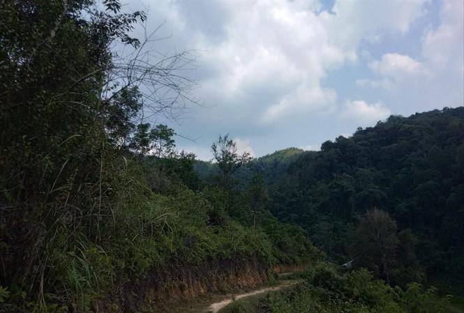 """Khu rừng rộng hàng trăm héc ta này đã được cấp trái phép cho 7 hộ dân """"nhảy dù"""". Ảnh: Duy Chiến"""