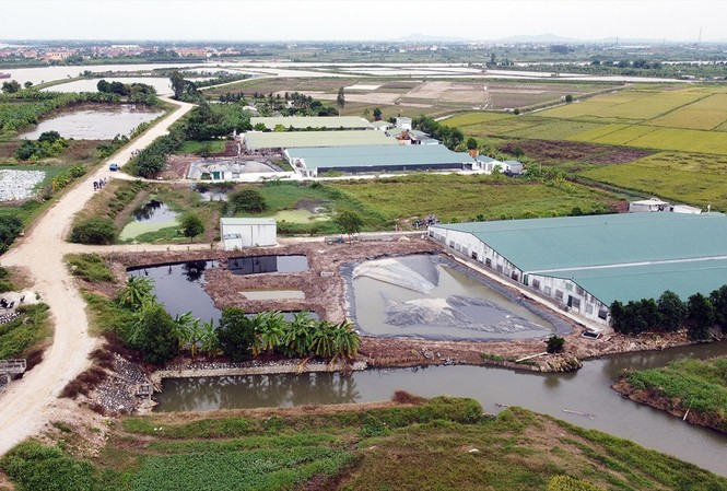 Toàn cảnh 8 trang trại chăn nuôi lợn tại xã Dũng Tiến (Vĩnh Bảo, Hải Phòng)