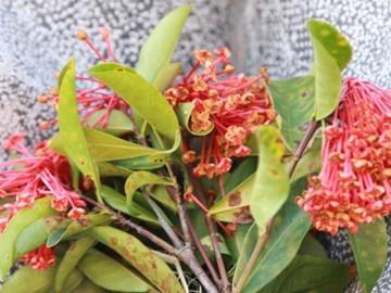 Đặt hoa rừng viếng Tướng Giáp ở Điện Biên