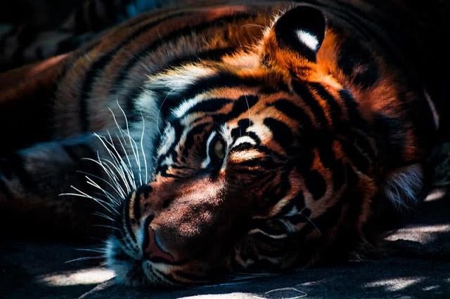 Top 10 loài động vật khỏe nhất hành tinh