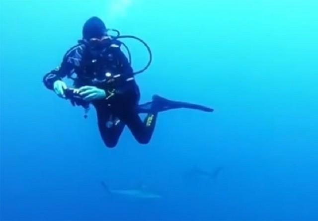 Bị bao vây bởi hàng trăm con cá mập, nữ thợ lặn vẫn không hề sợ hãi