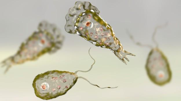 Sinh vật đơn bào Naegleria fowleri thường được gọi là amip ăn não người. Ảnh: Biospace.