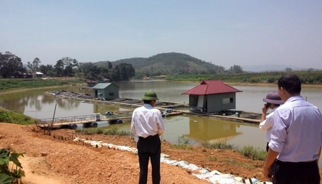 Những bè cá ở xã Quang Húc trên sông Bứa mang lại kinh tế cao cho người dân