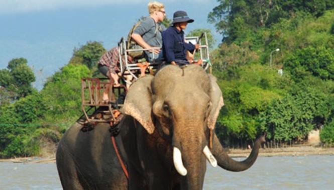 Trong nhiều năm qua, voi nhà trên địa bàn tỉnh Đắk Lắk đang sụt giảm nghiêm trọng do già yếu, bị nạn và khai thác du lịch quá sức.
