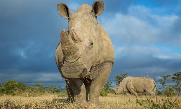 Cứ 1 trên 5 loài vật Trái Đất hiện phải đối mặt với nguy cơ tuyệt chủng, và con số này sẽ tăng lên 50% vào cuối thế kỷ này.