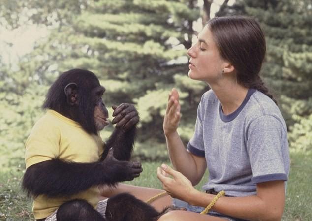 Nim được tình nguyện viên Joyce Butler dạy ngôn ngữ ký hiệu. (Ảnh: Daily Mail)