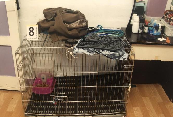 Chiếc chuồng mèo bị cặp vợ chồng nhẫn tâm dùng để nhốt con. (Ảnh: Today Online)