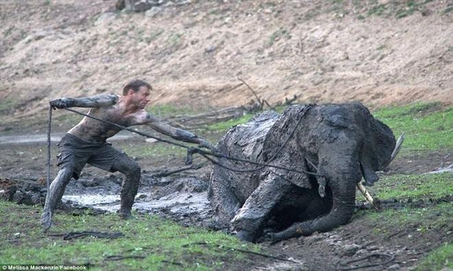 Ảnh vô cùng xúc động giải cứu voi sa lầy