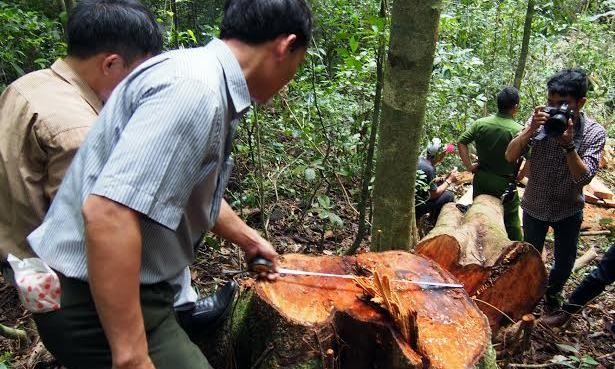 Lâm tặc xịt hơi cay kiểm lâm khi bị bắt quả tang phá rừng