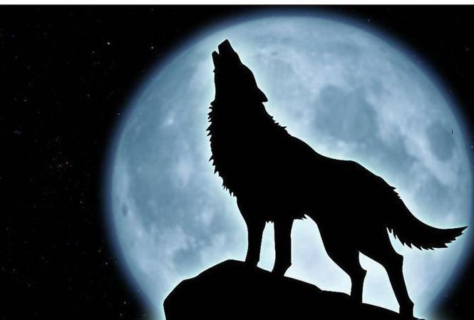 Tiếng hú của chó sói trong đêm là để tụ tập bầy đàn.