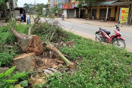 Cây xanh bị chặt hạ ở xã Bình Yên. Ảnh: Trường Phong