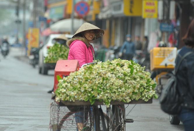 Hoa bưởi dịu dàng về trên phố ngày xuân