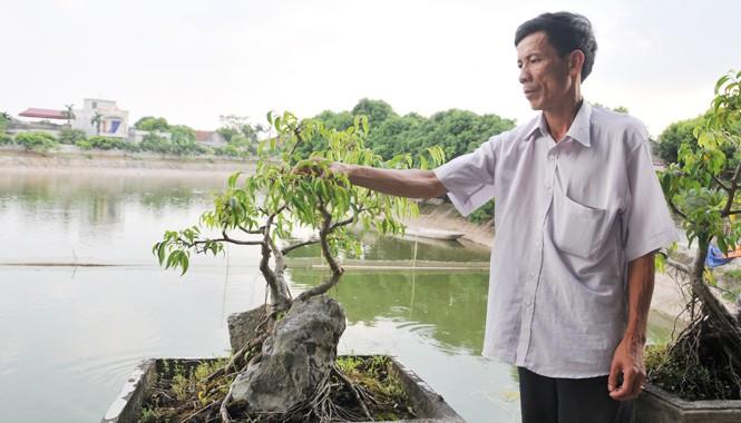 Ông Chương tỉa tót cho cây cảnh bên ao cá