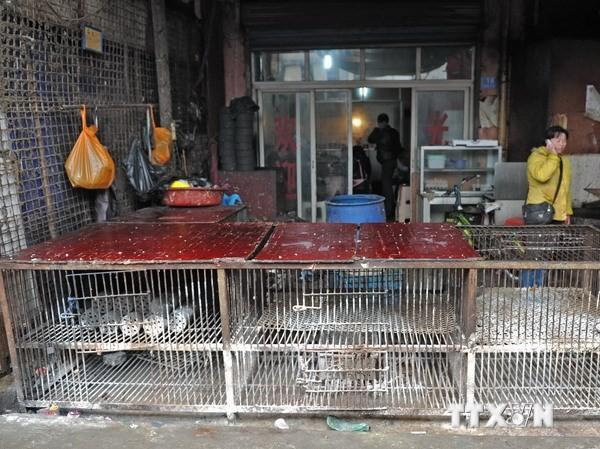 Các chợ gia cầm ở thủ phủ Trường Sa, tỉnh miền trung Hồ Nam đã dừng bán gia cầm. Ảnh: THX/TTXVN