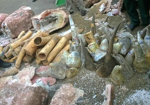 Ngà voi và sừng tê giác bị bắt giữ được ngụy trang bằng những khối đá cẩm thạch rỗng ruột. Ảnh: N. Trường.
